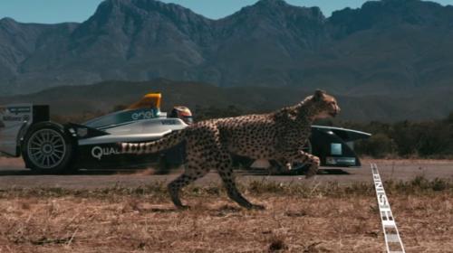Çita, Formula E aracına karşı