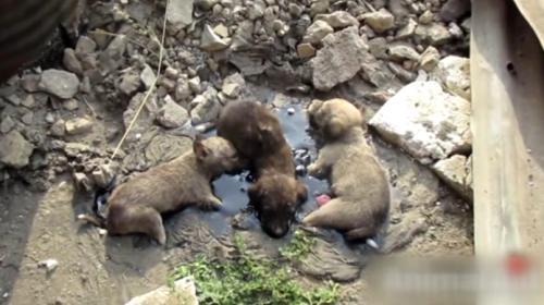 Hindistanda yavru köpekleri gönüllüler kurtardı