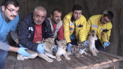 Kayseri Hayvanat Bahçesi'nin yeni sakinleri