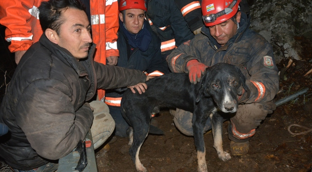 Kayalıklara sıkışan köpek kurtarıldı