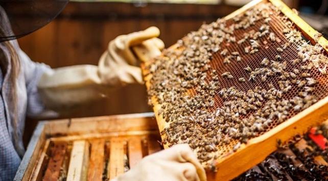 Arıcılara 60 milyon liralık büyük destek