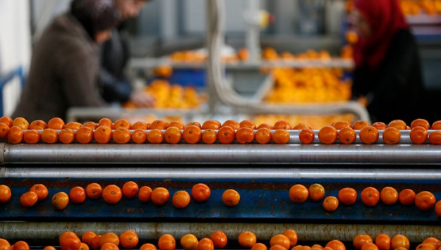 Yaş meyve sebze ihracatı geçen yıla oranla yüzde 13 arttı