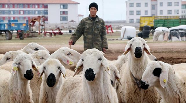 Yerli çoban sıkıntısı Afganlara istihdam sağladı