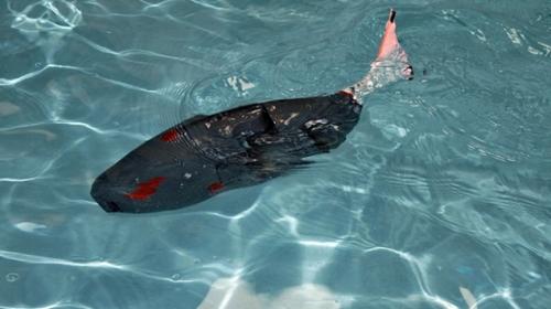 Robot balık, su altının yeni keşifçisi olacak