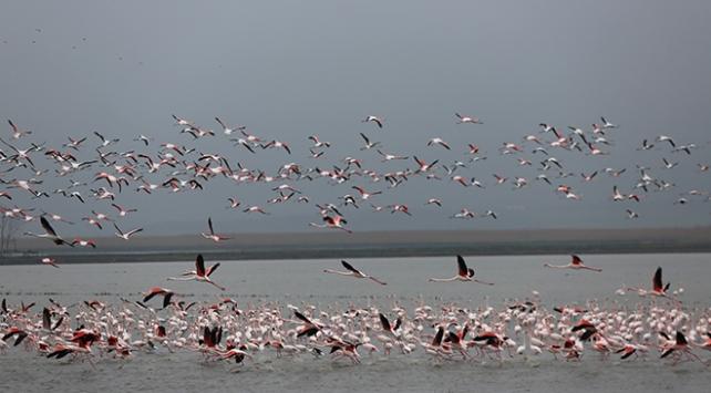 Gala Gölünün pembe tüylü misafirleri