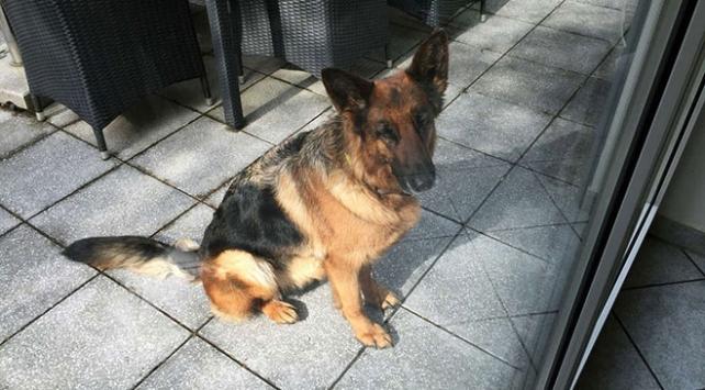 Almanyada kaybolan köpek İsviçreden çıktı