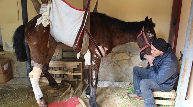 İzmirli hayvanseverden ölüme terk edilen at için yardım çağrısı