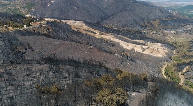 Menderesteki yangın bölgesi ağaçlandırılacak