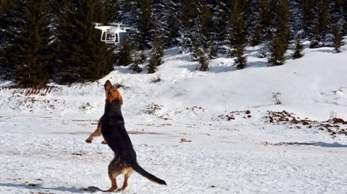 Dronea saldıran köpek gülümsetti