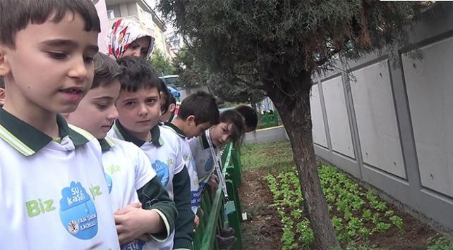 Su Kaşifi projesiyle öğrenciler yağmur sularını toplayıp sebze yetiştirdi
