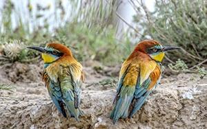 Van Gölü havzasının rengarenk göçmen kuşları