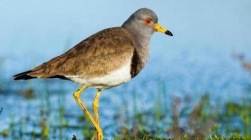 Türkiyede yeni bir kuş türü tespit edildi