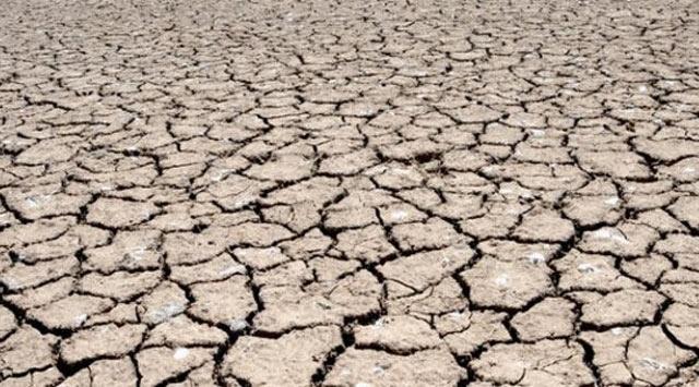 """Güney Afrikada kuraklık nedeniyle """"ulusal felaket"""" ilan edildi"""