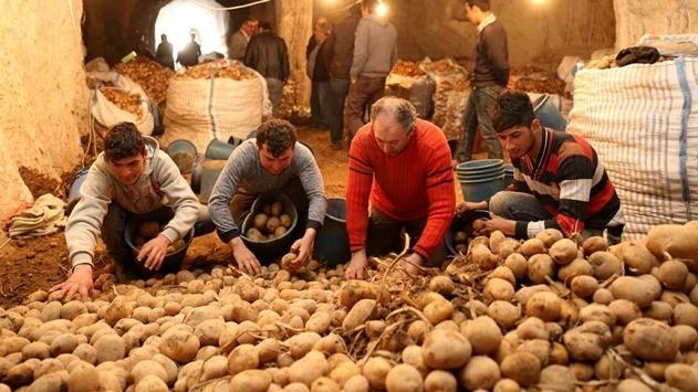 Depolarda 350-400 bin ton patates alıcı bekliyor