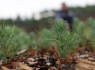 Orman Bakanlığı, 162 milyon fidanı bedelsiz dağıttı
