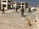 Mehmetçik Afrin'de EYP ve mayınları temizliyor