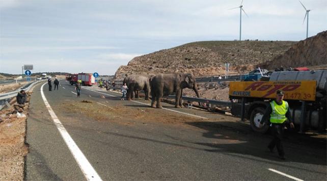 Sirk kamyonu kaza yaptı, filler otoyola dağıldı