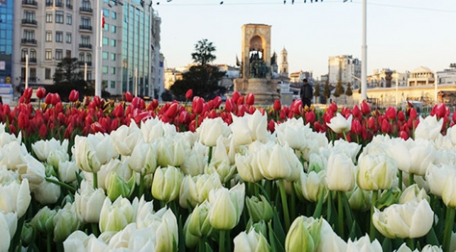 Taksim Meydanı lalelerle donatıldı