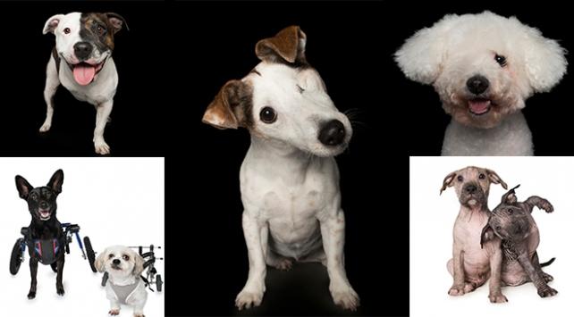 Engelli köpek fotoğrafçısı: Alex Cearns