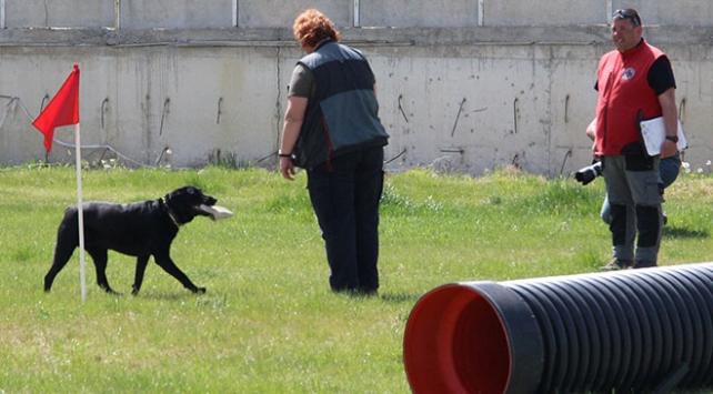 Arama kurtarma köpekleri en iyi olmak için yarıştı