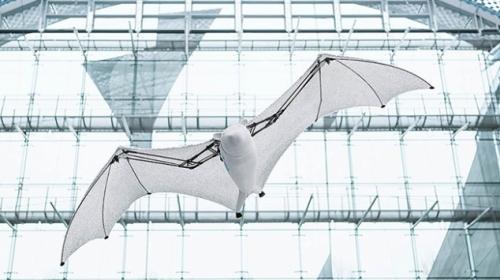 Biyonik uçan tilki yeteneklerini sergiledi