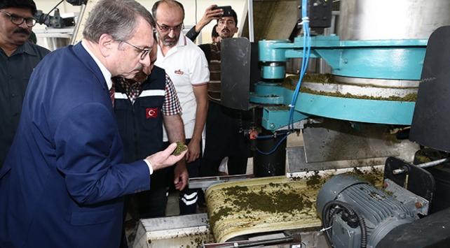 Çaykur, Pakistanda çay fabrikası açtı