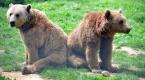 Baharın gelmesi ayıları kış uykusundan uyandırdı