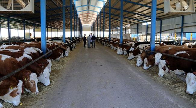 Kırsal kalkınmada 128 projeye 36,2 milyon liralık destek