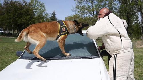 Terörle mücadelenin mayın ve EYP köpeklerine özel eğitim