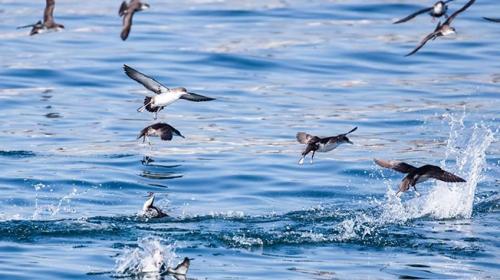 Balıkçılara yelkovan kuşu uyarısı