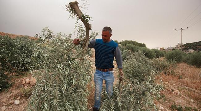 """İsrail """"devletin mülkü"""" diyerek Filistinlilerin tarım arazilerine hasar veriyor"""