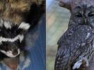 Şanlıurfa'da tedavi edilen sansar ve baykuş doğaya bırakıldı