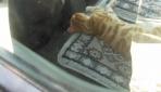 Sahibinin peşinden süt kamyonuna binen kedi, kendini araca kilitledi