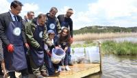 Abant Gölü'ne 100 bin alabalık yavrusu bırakıldı