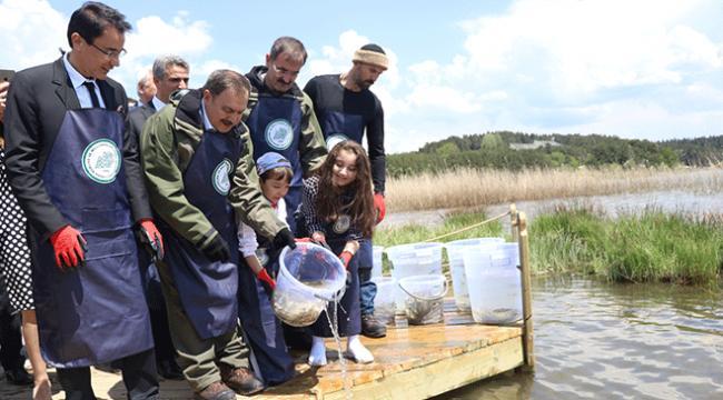 Abant Gölüne 100 bin alabalık yavrusu bırakıldı