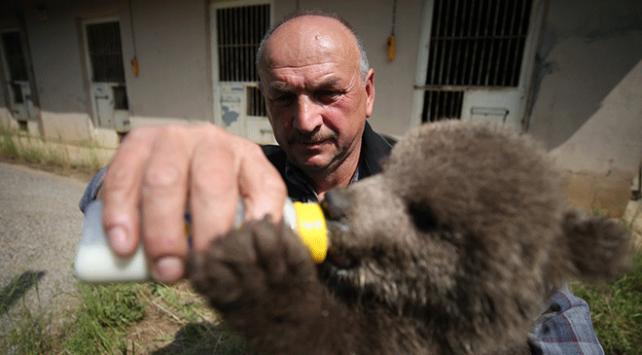 Ovakorusundaki ayılara 15 yıldır bebek gibi bakıyor