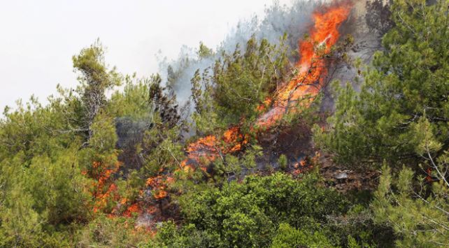 Türkiyede orman yangınlarının yarısının sebebi sigara
