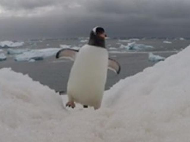 Sakar penguenlerin GoPro mücadelesi