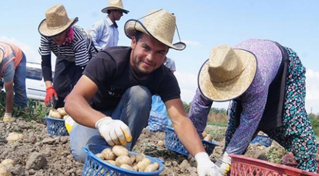 Genç Çiftçi Projesi fındık üretimini de olumlu etkileyecek