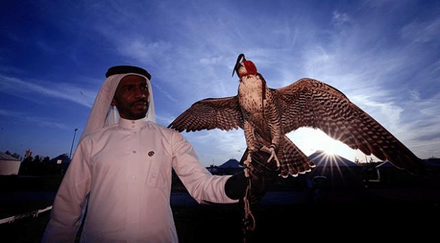 Katarın kanat çırpan çocukları: Şahinler