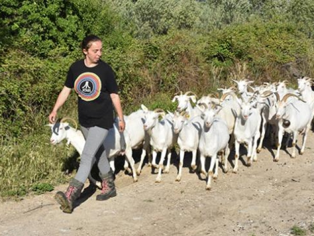 Yıllarca şehir hayatı yaşayan Elif Sarıkaya, köyde keçi güdüyor