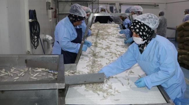 Yozgattan Avrupaya balık ihracatı