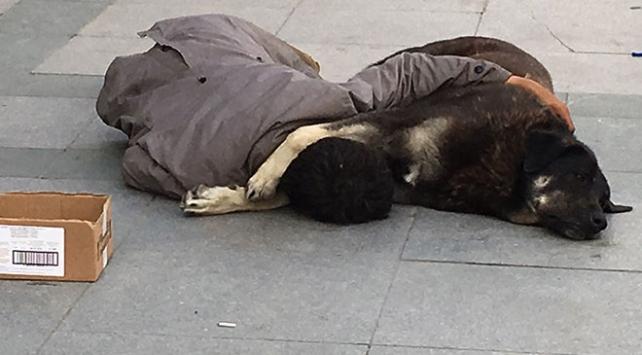 Sokak ortasında köpeğe sarılarak uyudu