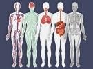 Oruç tutmak organların onarımını destekliyor