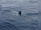 Dünyanın en hızlı köpek balığı Ege kıyılarında görüldü