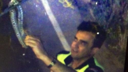 Polis, tırın sileceğine dolanan yılanı eliyle aldı