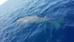 Nesli tehlike altında olan balina Fethiyede kameralara takıldı