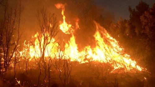 Muğlada 20 hektar ormanlık alan yangında zarar gördü
