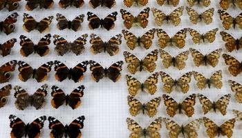 Türkiyenin biyolojik çeşitliliği Trakya Üniversitesindeki müzede sergilenecek