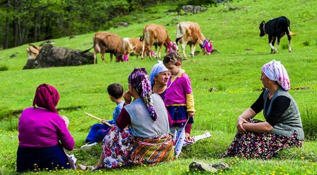 Doğu Karadenizde yeşeren yaylalara göç başladı